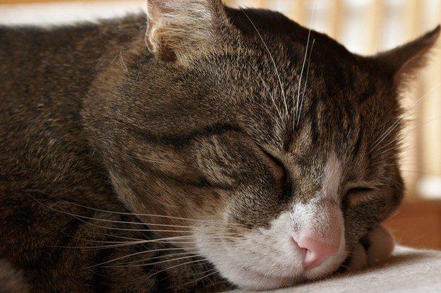 Повышенная сонливость - признак цирроза