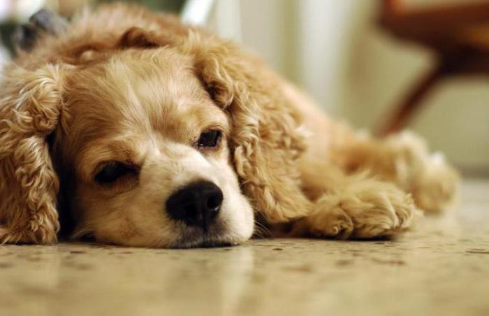 прател для собак инструкция отзывы