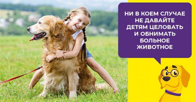 Правила применения глистогонного препарата для собак Прател