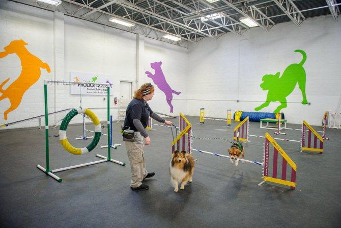 Правила соревнований аджилити для собак