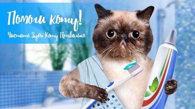 Правильная чистка зубов коту