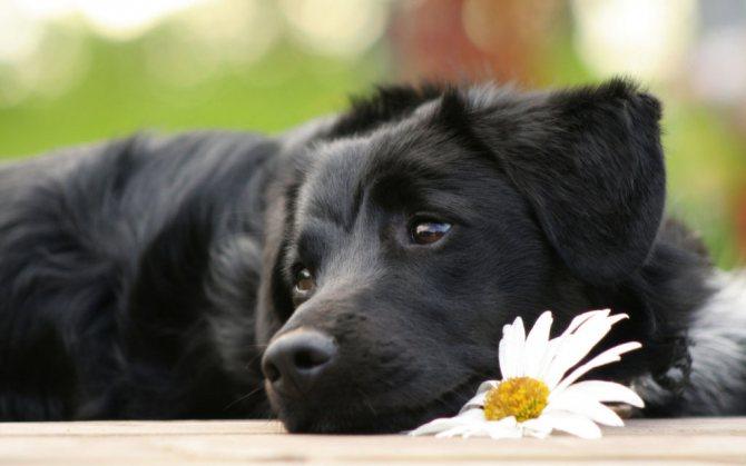 Правильная дегельминтизация собак или как глистогонить собаку