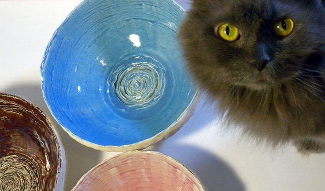 Правильная миска для кошки