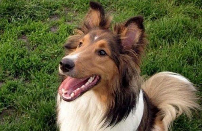 правильное обучение собаки к команде голос