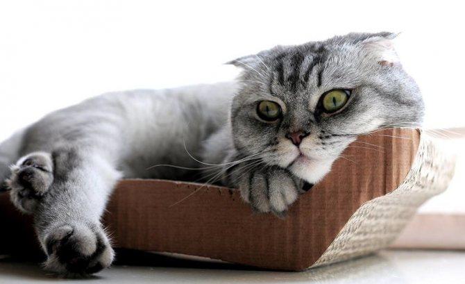 Правильные действия на стадии доврачебной помощи спасут жизнь коту