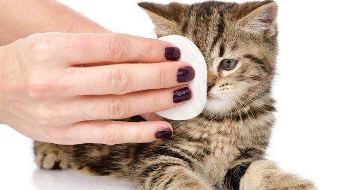 Правильный уход за глазками котенка