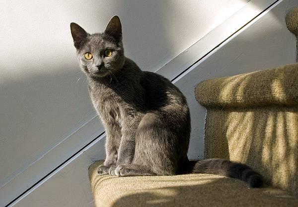 Правильный уход - залог долгой жизни кошек