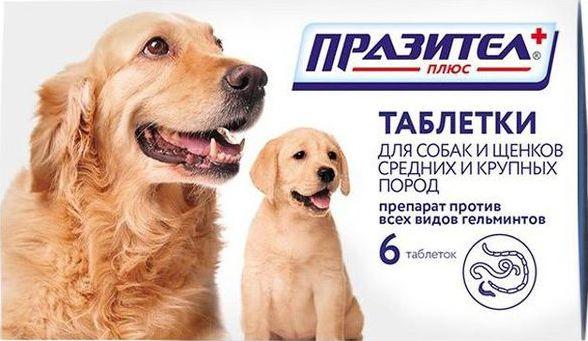 празител для собак