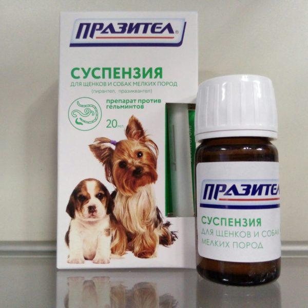 «Празител» — эффективное антигельминтное средство