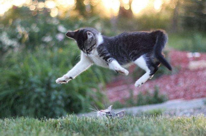 Празител не влияет на здоровье самой кошки