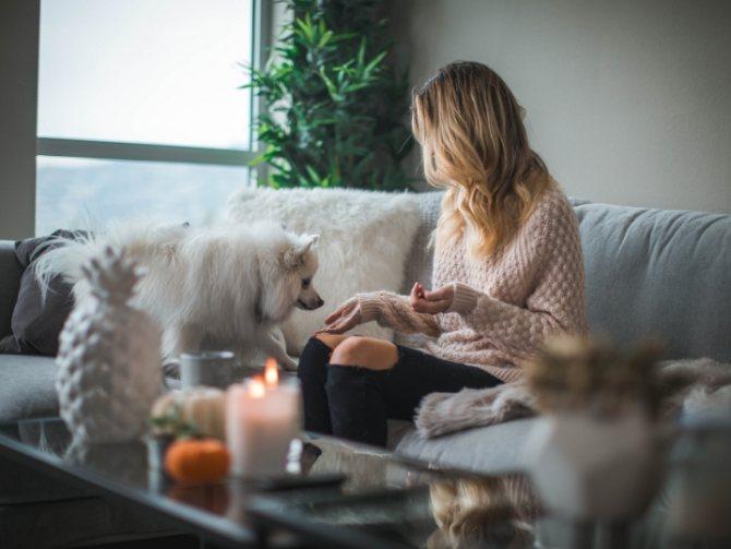 преимущества снятия швов у собаки на дому