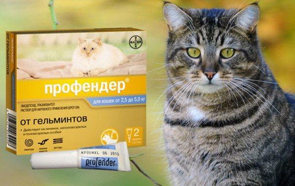 Препарат {amp}quot;Профендер{amp}quot; для борьбы с глистами у кошек