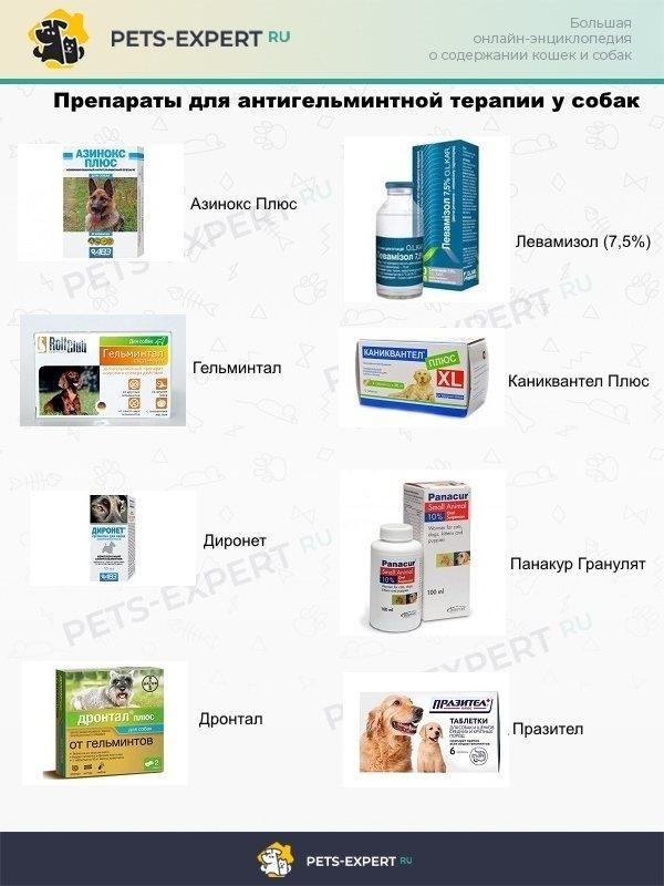 Препараты антигельминтной терапии у собак