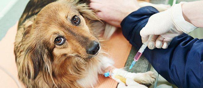 Препараты для лечения чумки у собак