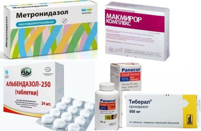 Препараты для лечения лямблий у собак