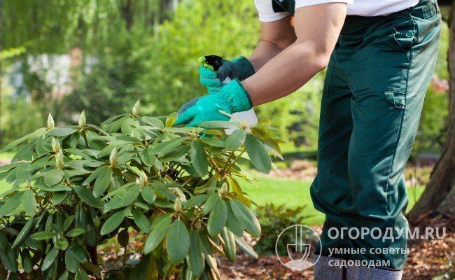 При неэффективности народных средств воспользуйтесь инсектицидами