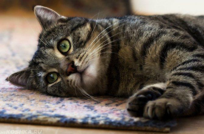 При отсутствии аппетита и вялости стоит показать животное ветеринару