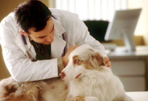 При подозрении на заболевания лучше всего обратиться к ветеринару