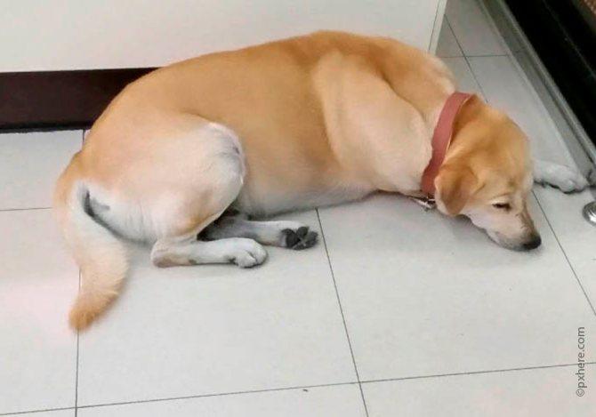 При приступе эпилепсии собаку нельзя трогать или переносить