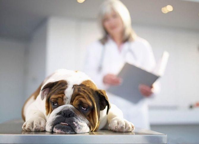 При проявлении побочных действий нужно обратиться к ветеринару