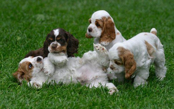 При составлении рациона важно учесть темперамент собаки