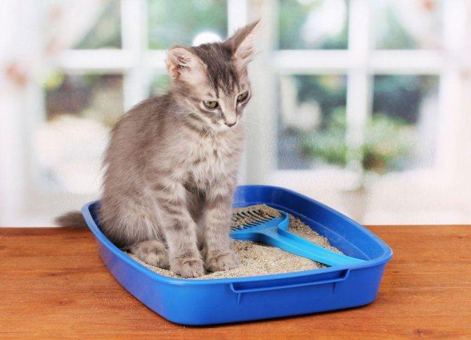 При заболевании у кошек нарушен обычный порядок мочеиспускания