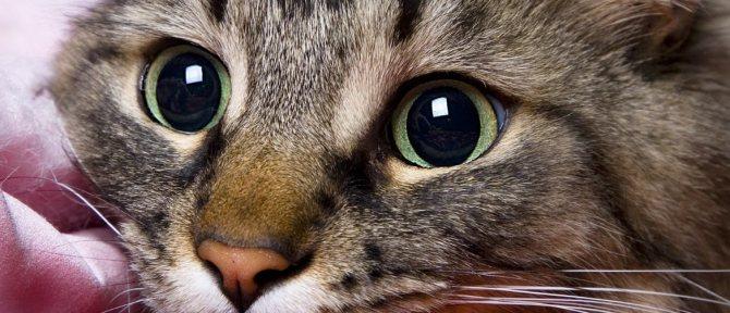 Причин почему кошка вылизывает под хвостом может быть несколько