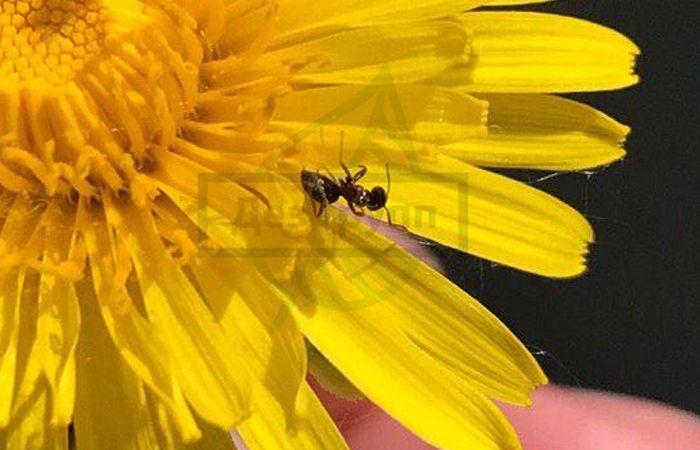 Причина появления муравьев в квартире - цветы, помойное ведро и другие
