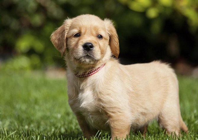 причины демодекоза у собак