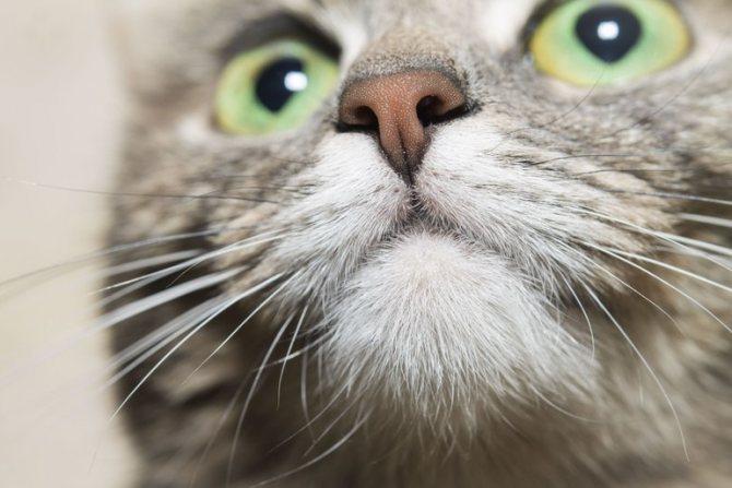 Причины мокрого носа