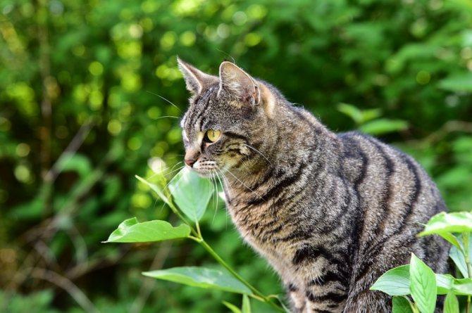 причины отравления у кошек