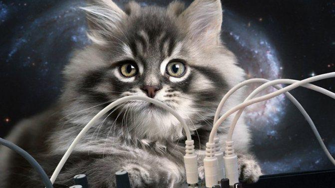 Причины, почему кот грызет провода