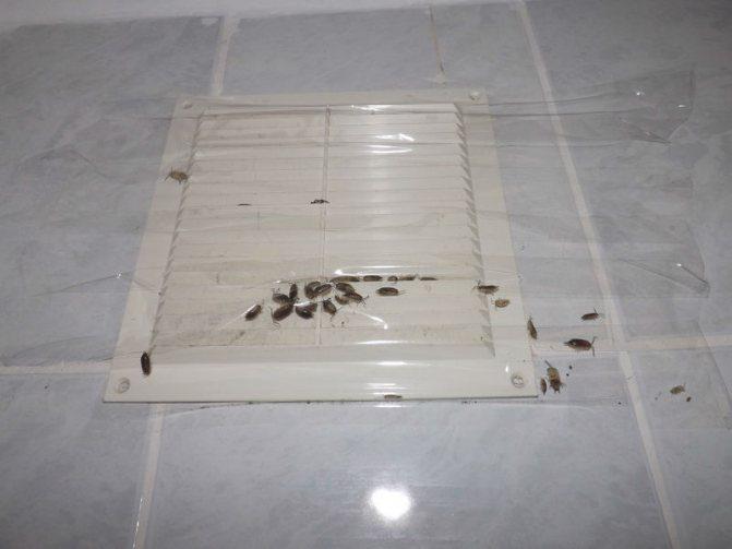 Причины появления белых насекомых в ванной и способы уничтожения