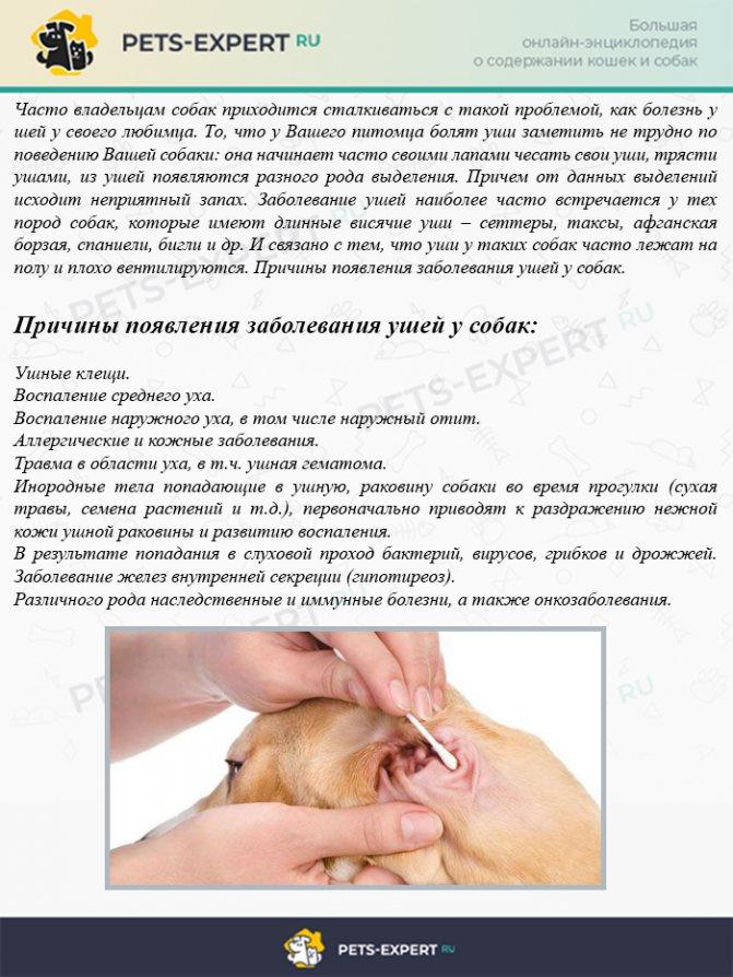 Причины появления заболевания ушей у собак