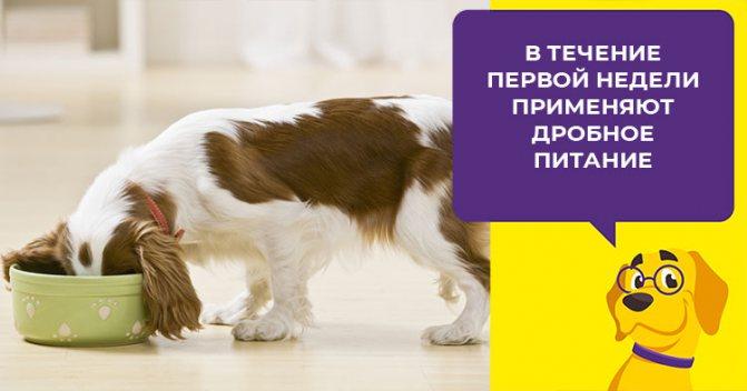 Причины рвоты желтой пеной у собак