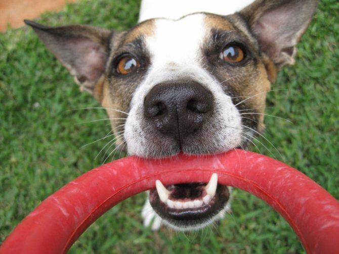 причины воспаления десен у собак