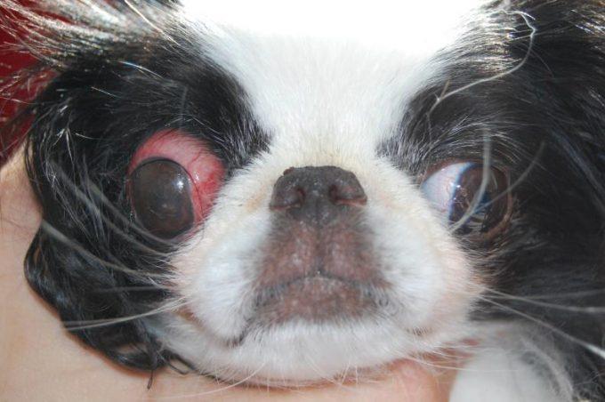 причины выпадения глаза