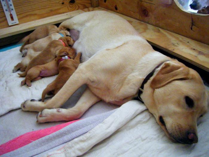 применение гамавита для собак