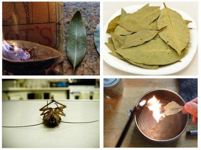 Применение лаврового листа от тараканов
