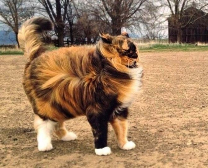 Приметы про кошек и погоду