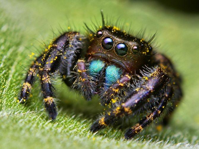 Приметы про пауков в доме и квартире