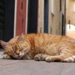 Приметы про сон кошки