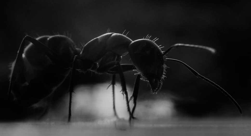 Приснился большой муравей - сонник