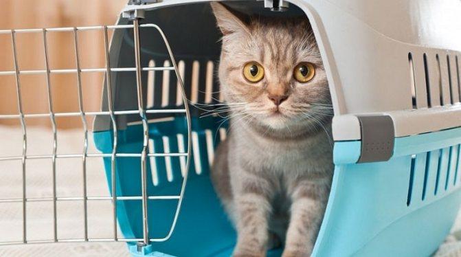 Присутствие переноски позволит кошке почувствовать себя защищенной в новой обстановке