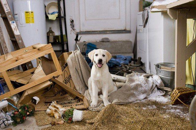 Приучение собаки к своему месту позволит избежать не только обострения аллергии, но и погромов в доме