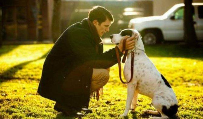 Приучение взрослой собаки к поводку требует терпения от хозяина