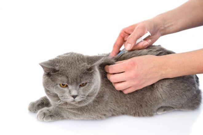 прививка коту