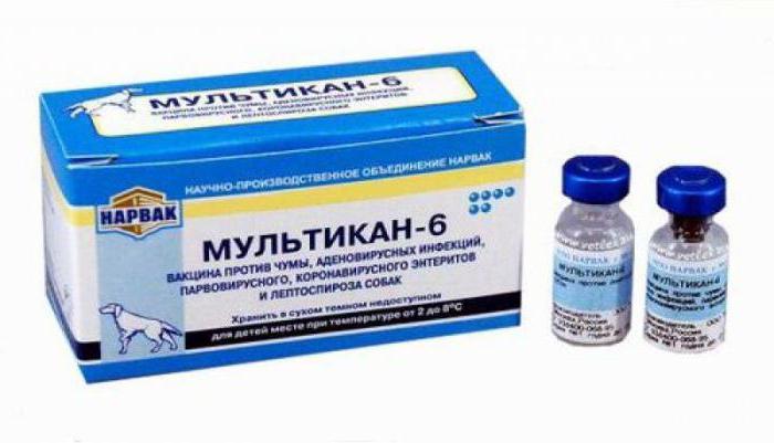 прививка мультикан 6