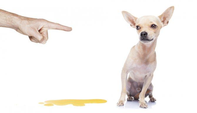 Признаки цистита у собак