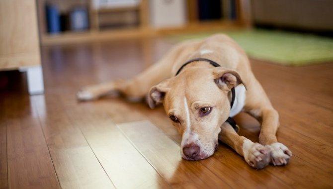 признаки инсульта у собак